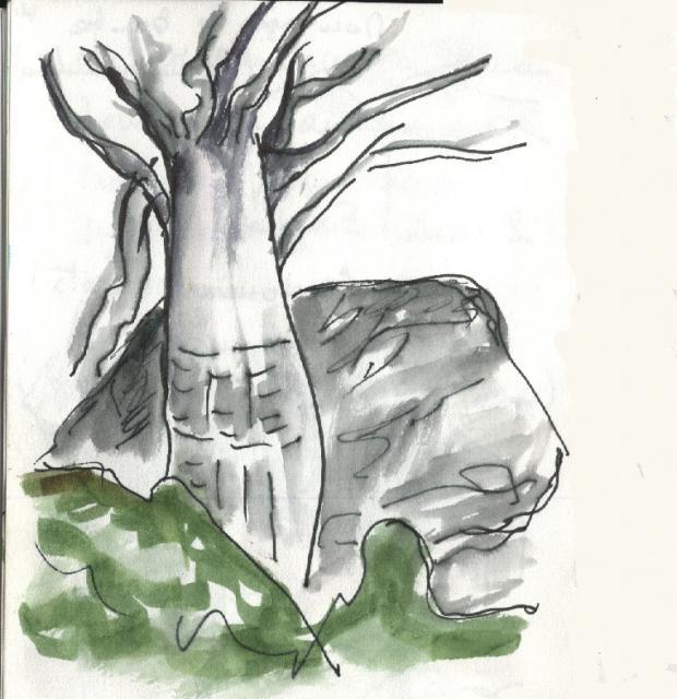 Yendoma - le baobab