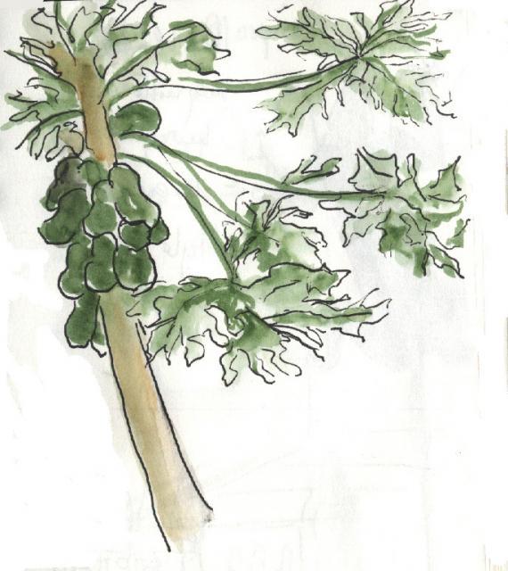 Mopti - arbres 2